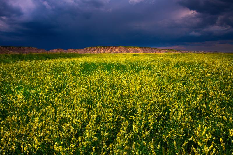 Gloomy Skies Over The Sweet Clover - Badlands National Park, South Dakota