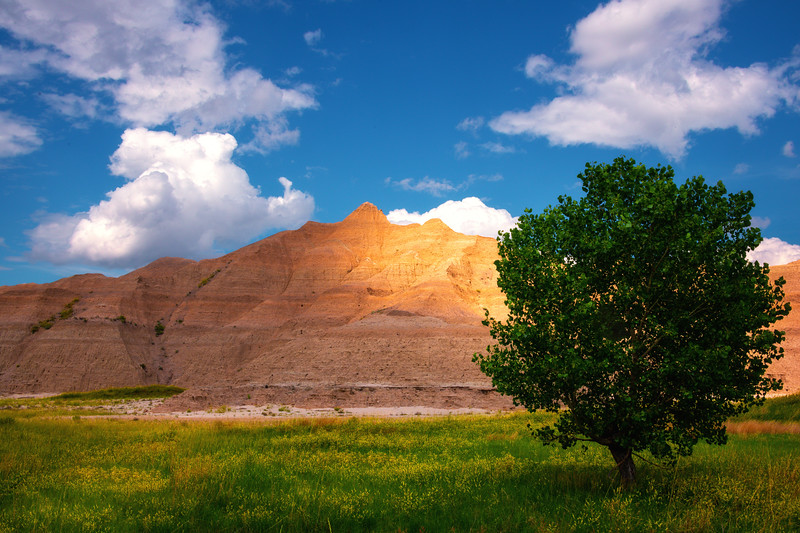Nothing But A Tree In The Badlands - Badlands National Park, South Dakota