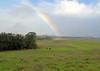 upcountry rainbow