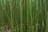 Greenscape