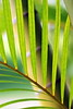 palm with bamboo