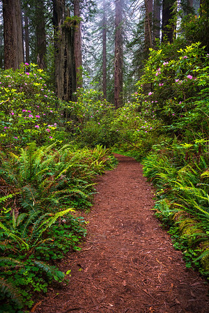 Images from around the California Redwoods and Del Norte Coast Redwoods State Park