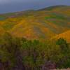 California Wildflowers_2