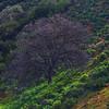 California Wildflowers_54