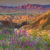 California Wildflowers_51