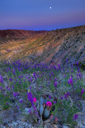 California Wildflowers_69