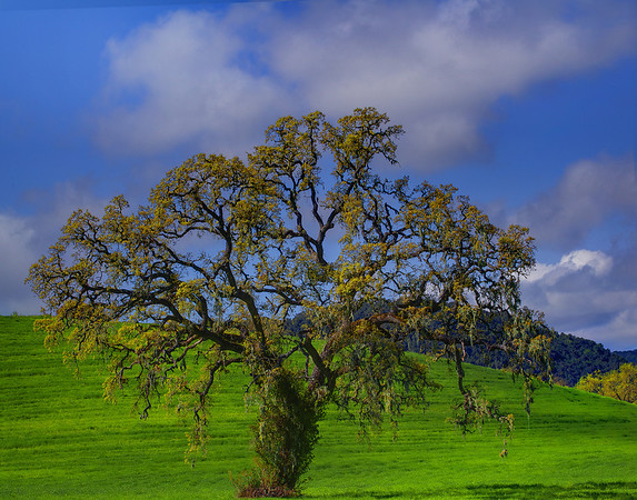 California Wildflowers_3