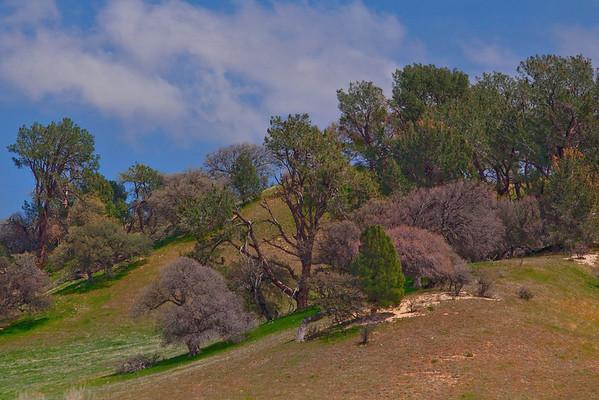 California Wildflowers_100