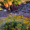 California Wildflowers_60