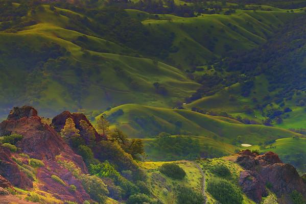 California Wildflowers_101