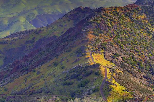 California Wildflowers_105