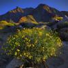 California Wildflowers_11
