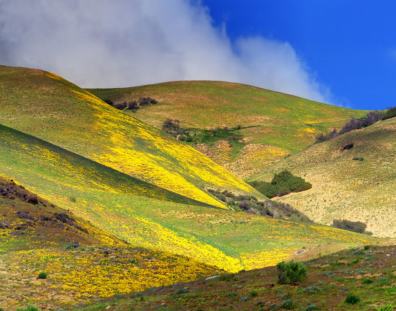 California Wildflowers_30