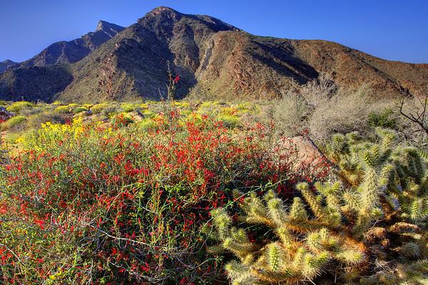 California Wildflowers_75