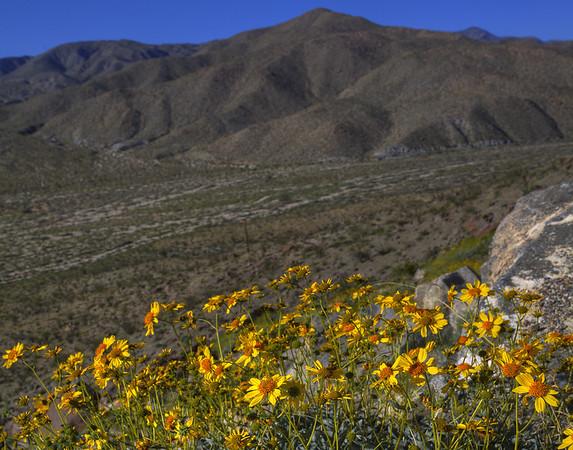 California Wildflowers_110