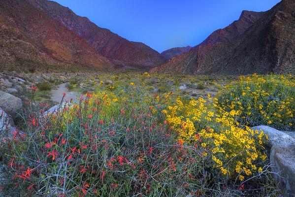 California Wildflowers_72
