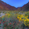 California Wildflowers :