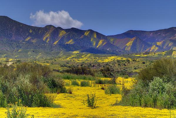 California Wildflowers_25