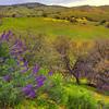 California Wildflowers_50