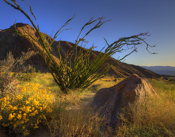 California Wildflowers_104