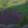 California Wildflowers_99