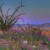 California Wildflowers_47