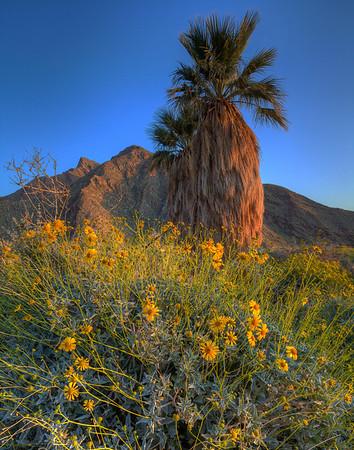 California Wildflowers_109