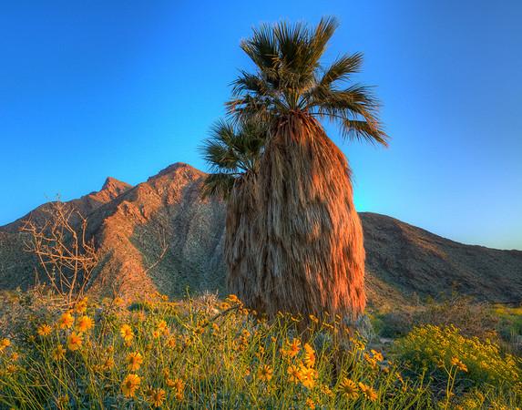California Wildflowers_61
