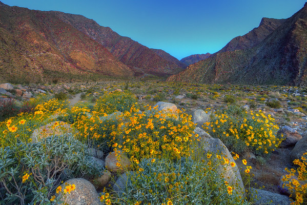 California Wildflowers_111