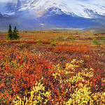 Fall colors late in the season blanket the Icefields Parkway