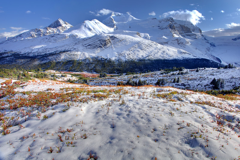 The beautiful hike up Wilcox Pass near the Icefields Parkway