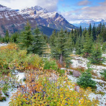 The turqoise waters of Peyto Lake in Banff National Park
