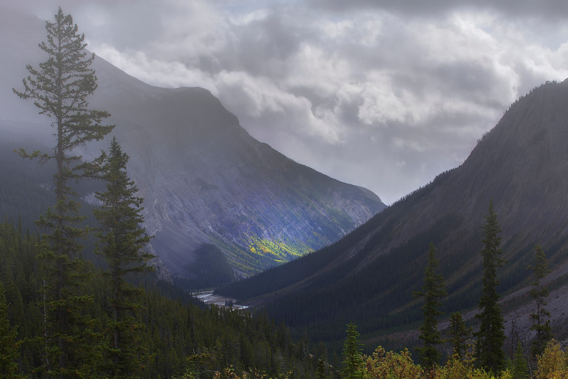 One of the best places to see fall colors along the Icefields Parkway is the Wilcox Pass