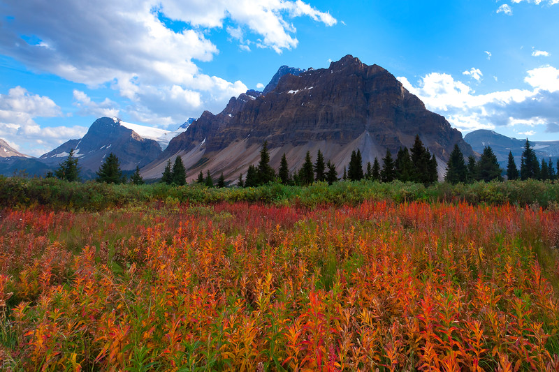 Stunning fall colors surround Bow Lake along the Icefields Parkway