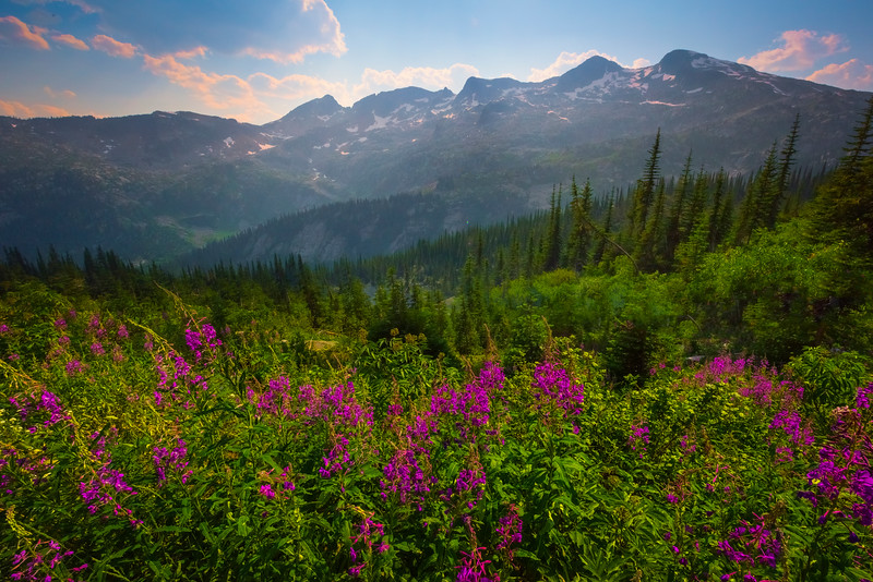 The Kokanee Glacier And Fireweed Kokanee Lake, Kootenay Rockies, BC, Canada