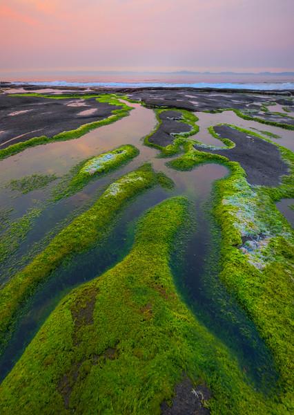 Patterns Of Unique Shoreline Life Payment Creek, Parkinson Trailhead, Juan De Fuca,  Vancouver Island, BC, Canada