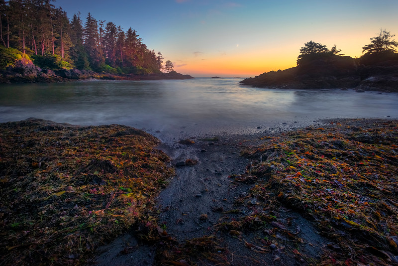 Solitude In Nightime Bay Pacific Rim National Park Reserve, Vancouver Island, BC,  Canada
