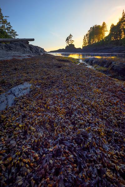 Coastal Life Along The Shore Near Sunset - Botany Bay, Juan De Fuca Trail,  Vancouver Island, BC, Canada