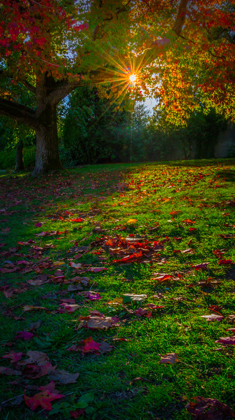 Stanley Park Fall Color Leaves On Seawall - Stanley Park Seawall, Vancouver, BC, Canada