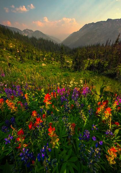 Wildflowers Leading Into The Valley - Idaho Pass, Kootenay Rockies, BC, Canada
