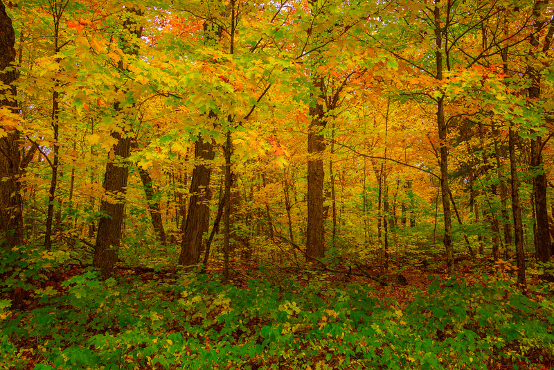 Forests In All Different Colors - Algonquin Provincial Park, Nipissing, South Part, Ontario, Canada