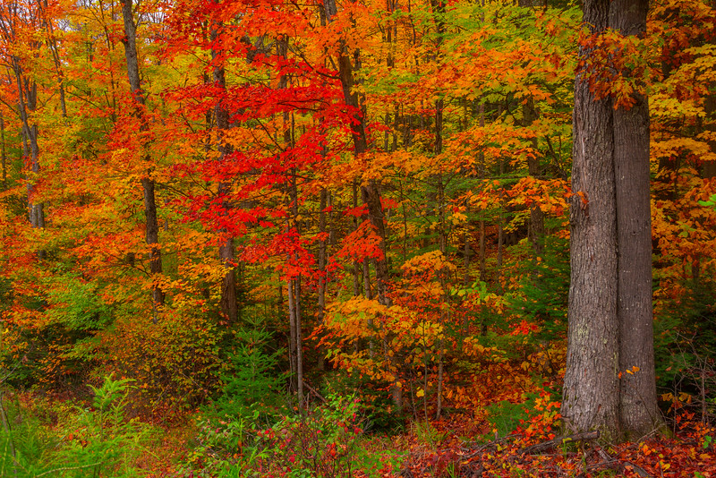 A Painting Of All Colors - Algonquin Provincial Park, Nipissing, South Part, Ontario, Canada