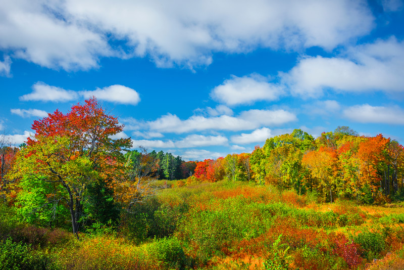 Fields Of Endless Autumn Color