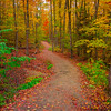 One Of Many Trails In Algonquin Dressed In Foliage - Algonquin Provincial Park, Nipissing, South Part, Ontario, Canada