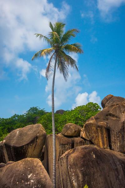 Striations In The Rocks And A Palm Tree - The Baths, Virgin Gorda, British Virgin Islands, Caribbean