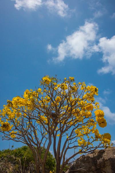 Dreaming Of Yellow - The Baths, Virgin Gorda, British Virgin Islands, Caribbean