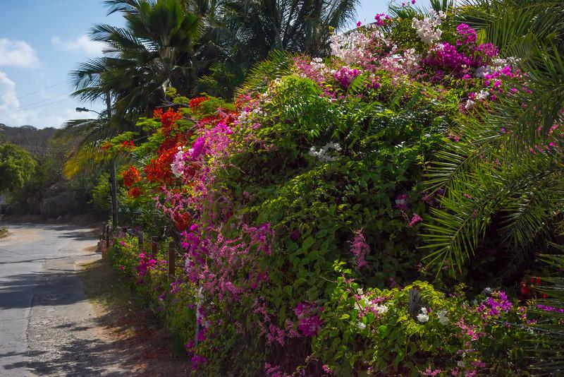 The Colorful Streets Of Virgin Gorda - Virgin Gorda, British Virgin Islands, Caribbean