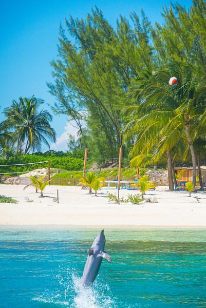 Dolphin_3 - Salt Kay, Bahamas, Caribbean