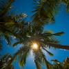 Looking up At The Sun Through The Palms - Salt Kay, Bahamas, Caribbean