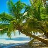 Leaning Palm Trees In Paradise - Salt Kay, Bahamas, Caribbean